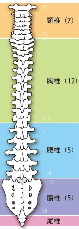坐骨神経痛へのアプローチとは?