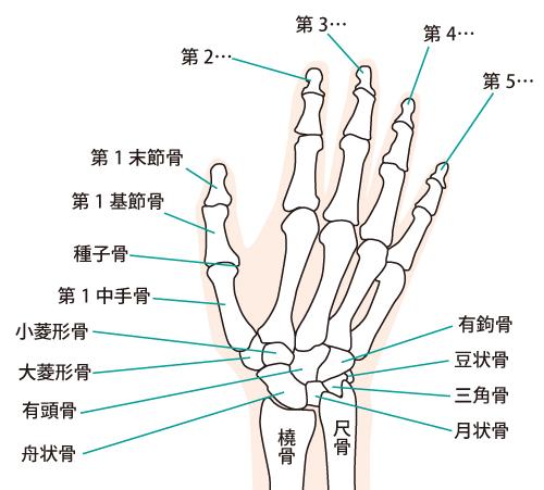 指の関節のイラスト